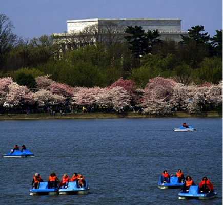 pc: http://living-in-washingtondc.com/tidalbasinpaddleboat-jeffersonmemorial.php