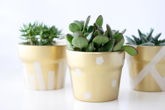 gold-pot-succulents-21-of-30.jpg